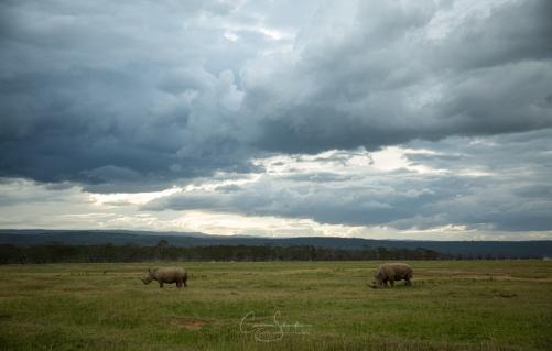 20112019_2756_KENYA