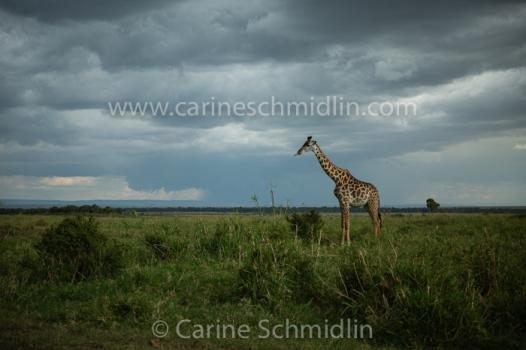 KENYA-2013